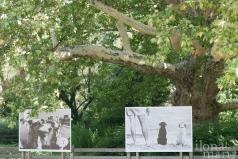 """""""Dogs"""" von Elliott Erwitt unter einer Platane im Doblhoffpark beim Photo Festival La Gacilly Baden"""