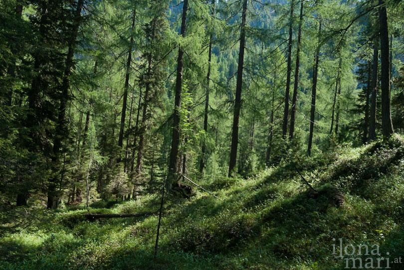 Bewaldete Wegstrecke in den Lienzer Dolomiten