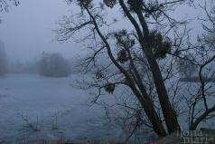 Mystische Teichlandschaft in Sárvár