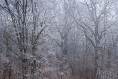Ausblick in den Eichenwald bei Sárvár