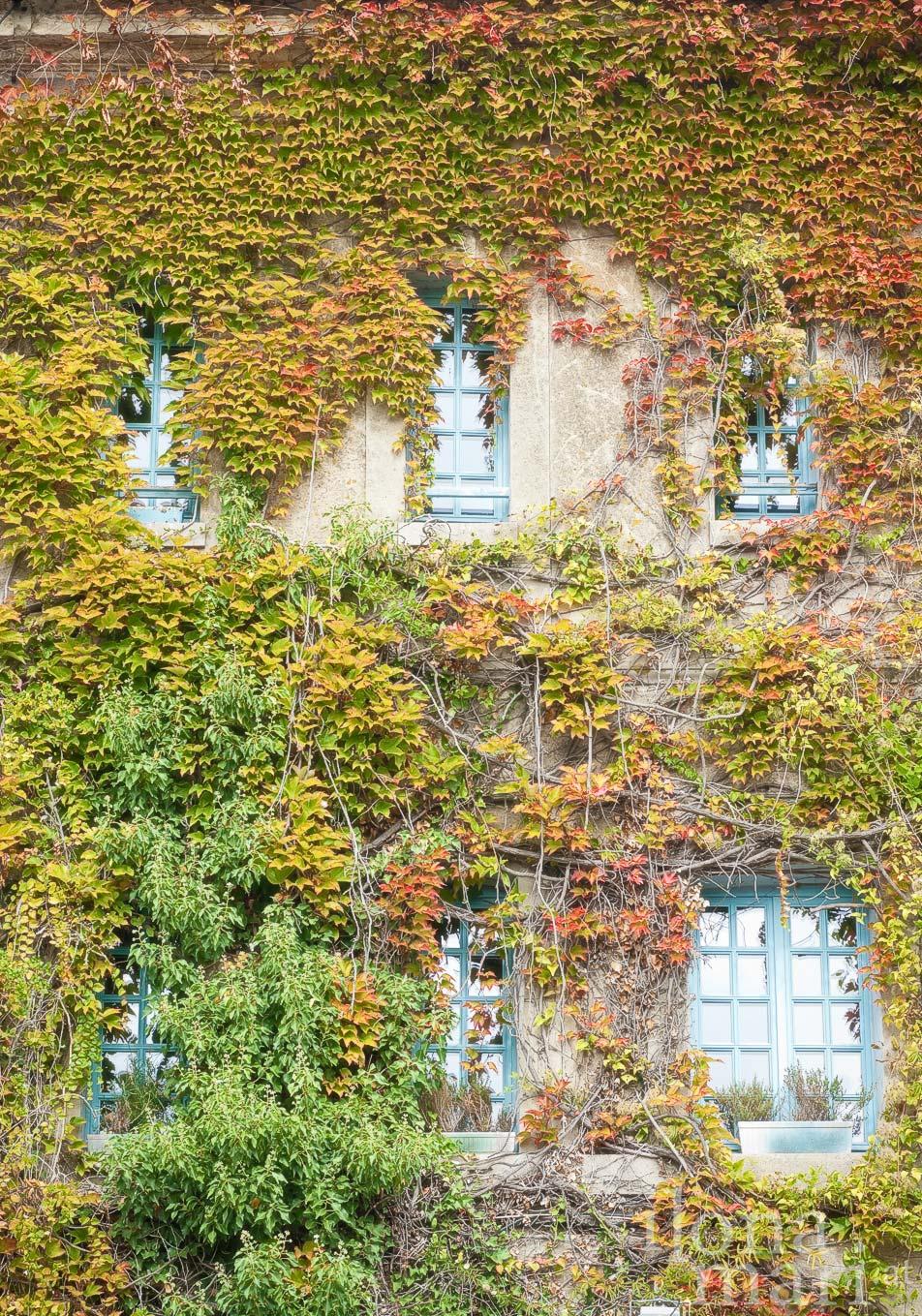 Efeubewachsene Fassade in Beaumont-en-Auge
